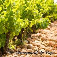 Metal Print: Chateauneuf-du-Pape