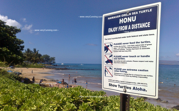 Paul Cunningham Photography | Hawaiian Scenes | Honu is our friend