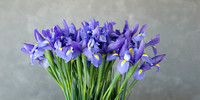 Metal Print: Irises (1 SOLD, 1 avail.)